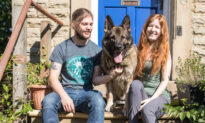 German Shepherd Was Stolen in Broad Daylight but Finds His Way Home 14 MONTHS LATER