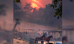 California Wildfires Destroyed Sanctuary for Abused Horses, but All Animals Survived