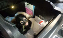 Border Officers Seize Baby Spider Monkey Hidden in Truck Console at US-Mexico Border