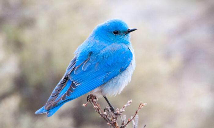 (Birdiegal/Shutterstock)