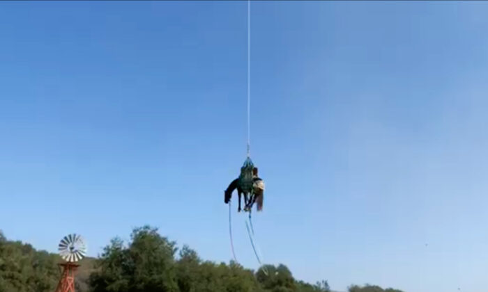 The Orange County Fire Authority airlifts a horse to safety in Rancho Mission Viejo, Calif., on Sept. 21, 2020. (Screenshot/Video Courtesy of the Orange County Fire Authority)