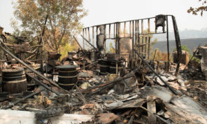 California Pet Store Owner Helps Man Who Lost His Home in LNU Lightning Complex Fire