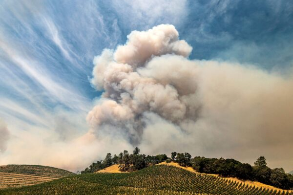A plume rises over a vineyard