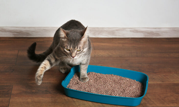 Offer cats litter that's similar to the soft, sandy soil that they are instinctively drawn to. (Africa Studio/Shutterstock)