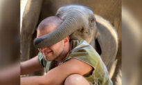 Adorable Pictures Show Playful Elephants Playing a Game of 'Guess Who' With Tourists