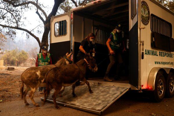 Napa Valley Community Animal Response Team