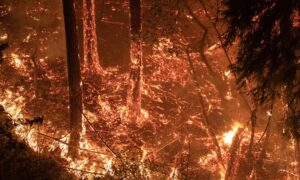 California Residents Again Face Fire Anguish as Homes Burn