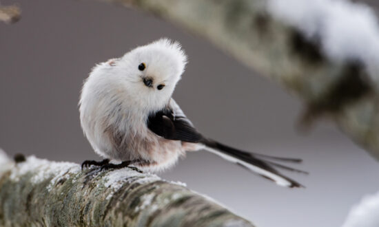 Majestic Birds: Each One Is the Most Beautiful and Cutest of All