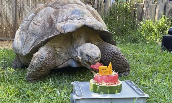 Cerro the Galapagos tortoise (Caters News)