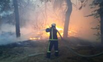 Eight Killed, 10 Hospitalized in Forest Fires in Eastern Ukraine