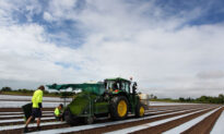 Young Aussies Farm Incentive $6000 to Fill Harvest Shortages