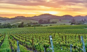 Wine Talk: Somm Challenge Standouts