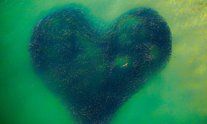 """""""Love Heart of Nature."""" (Courtesy of Jim Picôt/Siena Drone Photo Awards 2020)"""