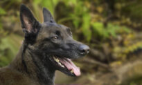 Kindergartener Gets Lost in the Woods but Is Rescued by K9 Police Dog in Maine