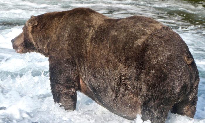 File photo of a brown bear. (U.S. National Park Service/ Handout via Reuters)