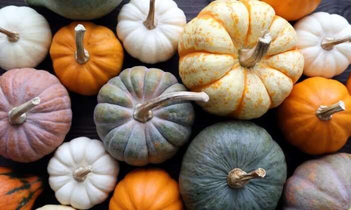 To store well, pumpkins should have a 3- or 4-inch piece of stem.  (Krzysztof Slusarczyk/Shutterstock)
