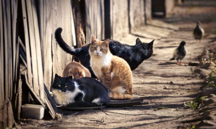 Cats are the most common species hoarded, followed by dogs. (LedyX/Shutterstock)