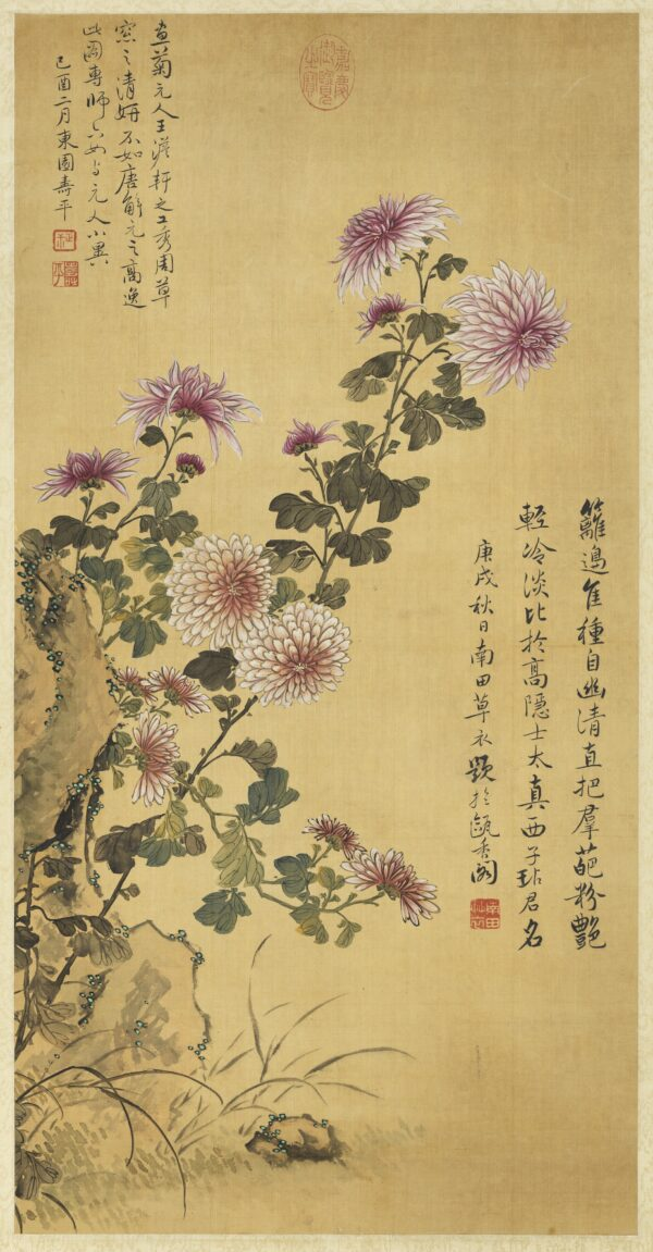 Chrysanthemums Yun Shouping
