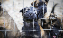 Over 100 Starving and Dead Dogs Found in Squalid Home, Saved by Rescue Group