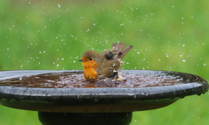 All birds need water to drink and will bathe even when it is very cold out. (Gillian Pullinger/Shutterstock)