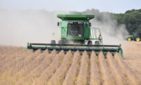 Community Rallies to Help Harvest Soybeans as Farmer Recovers From Triple Bypass Surgery