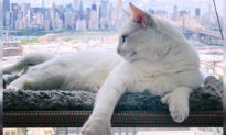 New York City's 'Genetically Different' Special-Needs Cat Is an Instagram Star