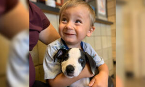 Toddler Born With a Cleft Lip Adopts Puppy With the Same Condition From a Michigan Shelter