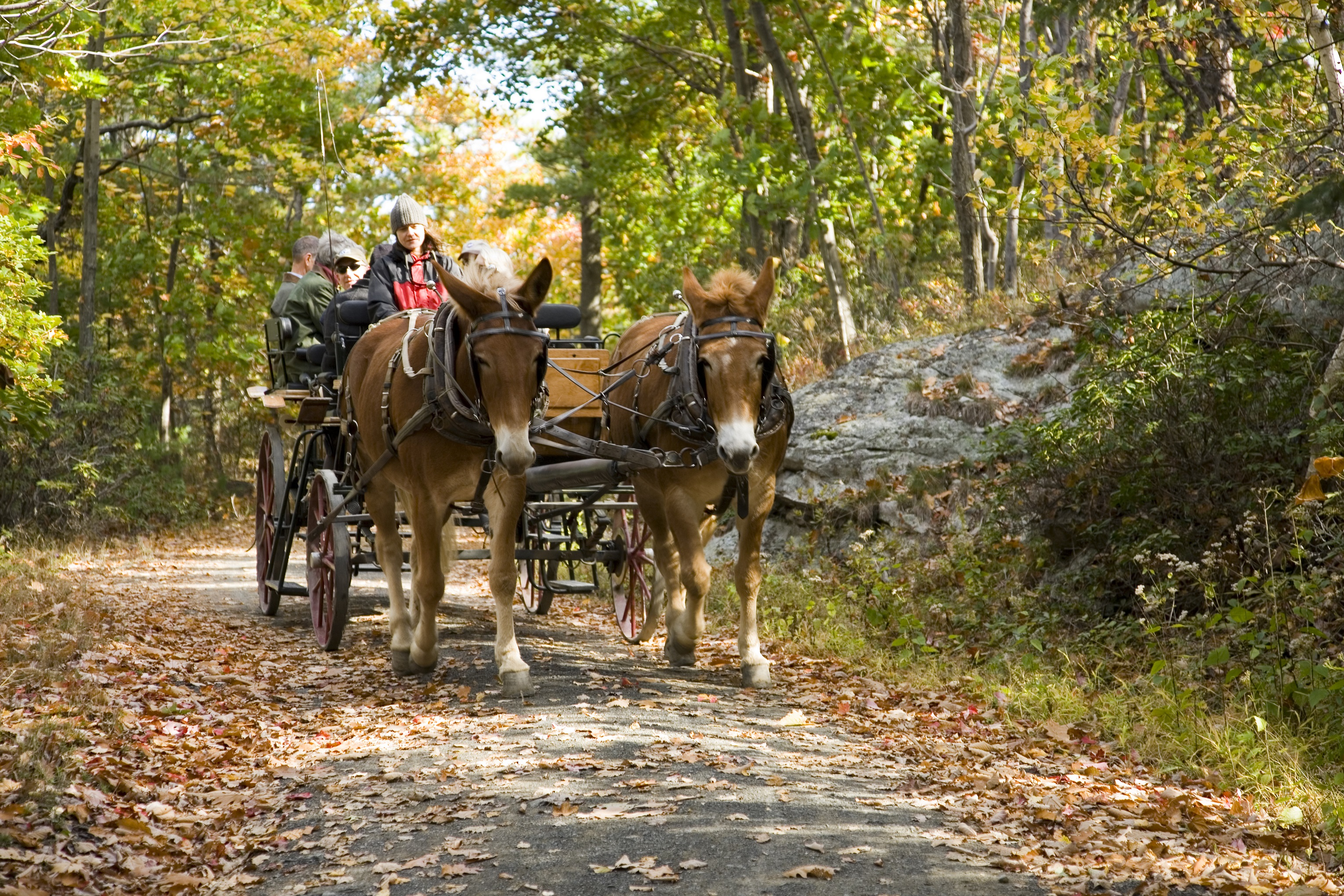 Mohonk_Fall-Foliage-Carriage-Ride