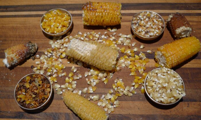 The only ingredient for chicos is corn—preferably with the husk on—and each batch will have a unique character, depending on the corn and how long it's roasted. (Ari LeVaux)
