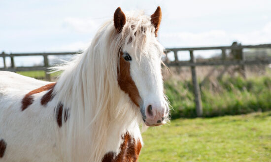 Severely Neglected Pony Left for Dead Rescued by RSPCA, Makes Remarkable Recovery