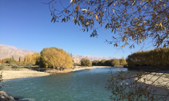 Depletion of Habitat of a Himalayan Fish May Signal Danger to Indus River