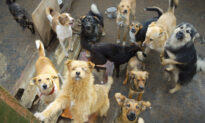 130 Stray Dogs From Puerto Rico Adopted by Americans With 'Lockdown Loneliness'