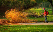 Rakes vs. Leaf Blowers: Benefits and Drawbacks