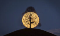 Photo of Full Moon Behind Leafless Tree Went Viral–and Photographer Shares Story Behind It