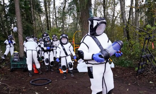 Scientists Remove 98 'Murder Hornets' in Washington State