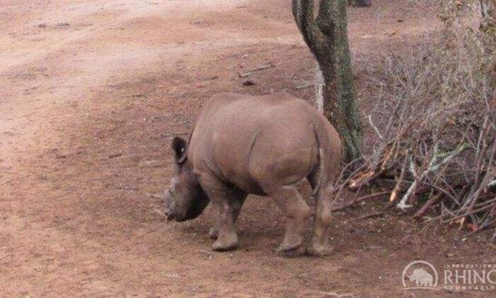 (Courtesy of International Rhino Foundation)