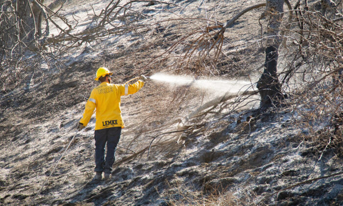 A firefighter sprays water on a scorched tree burned during the Blue Ridge Fire in Yorba Linda, Calif., on Oct. 29, 2020. (John Fredricks/The Epoch Times)