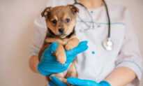 Ask the Vet: Don't Ignore Your Dog's Animal Hospital Aggression