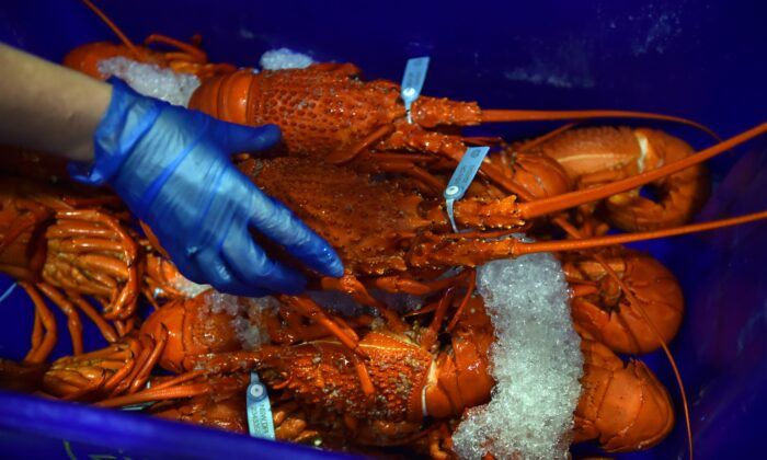 Cooked lobsters for sale in the auction house at the Sydney Fish Market in Sydney, Australia, on Dec. 23, 2014. (Peter Parks/AFP via Getty Images)