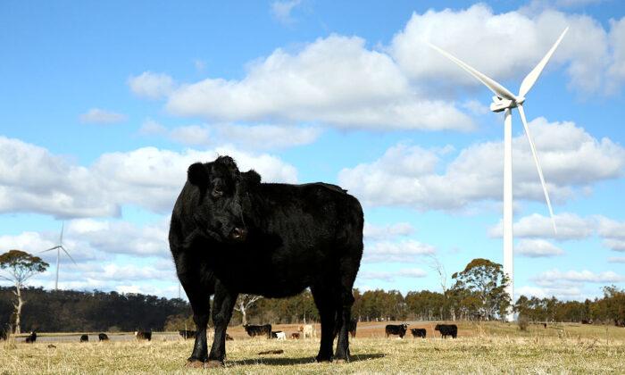 Taralga Wind Farm in Taralga, NSW, Australia on Aug. 31, 2015. (Mark Kolbe/Getty Images)