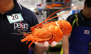 Australia Pauses Lobster Exports Amid China Customs Dispute