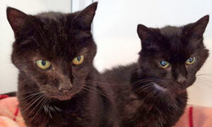 Britain's Oldest Cat Brothers, 21, Find Home Together After Massive Social Media Campaign