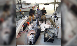 Teen Fishermen Reel In 'Absolute Beast' 10-Foot Bluefin Tuna Weighing Over 1,000 Pounds