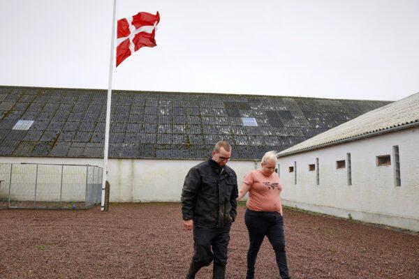 Denmark mink cull