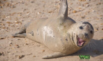 Photographer Catches Friendly Seal Sneaking Cuddles and Hitching Rides With Beachgoers