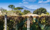 Pompeii Is Famous for Its Ruins and Bodies, but What About Its Wine?