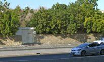 Bomb Blast Hits Remembrance Day Event at Saudi Non-Muslim Cemetery