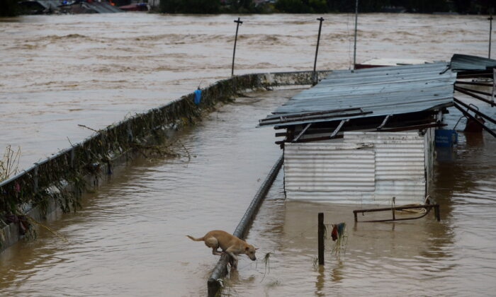 A dog hangs on a steel fence of a flooded house near a river following Typhoon Vamco, in Marikina, Metro Manila, Philippines, Nov. 12, 2020. (Lisa Marie David/Reuters)