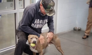 Man Spots His Lost Dog on the Internet 6 Months After Losing Him–and Their Reunion Video Is Amazing