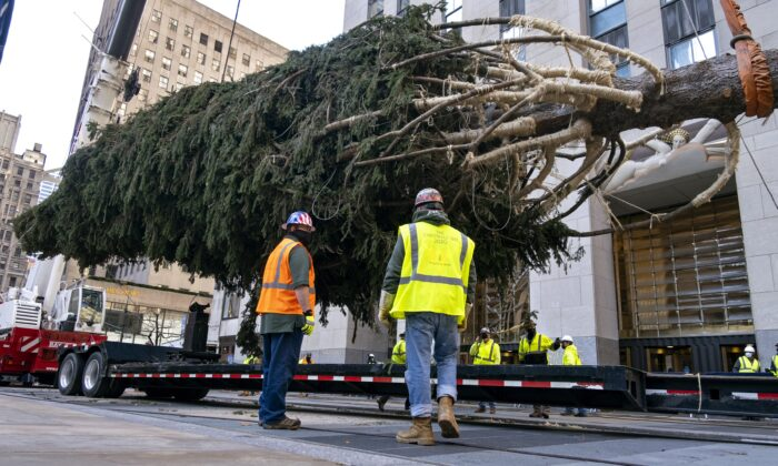 The 2020 Rockefeller Center Christmas tree, a 75-foot tall Norway Spruce that was acquired in Oneonta, N.Y., is suspended by a crane as its is prepared for setting on a platform at Rockefeller Center, on Nov. 14, 2020, in NY. (Craig Ruttle/AP Photo)